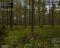 Wolf Simulator v1.0, скриншоты . Почти готовы к выходу в ранний доступ Steam. - Изображение 5