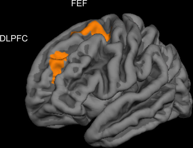 Ученый попросил власти США одобрить игру для тренировки мозга  - Изображение 3