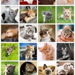 Скриншот Adorable Kitten Jigsaw Puzzle – Изображение 3