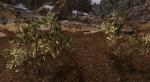 Этот мод для Skyrim сделает растительность по-настоящему реалистичной. - Изображение 10