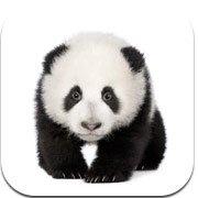ABA Flash Cards - Zoo Animals