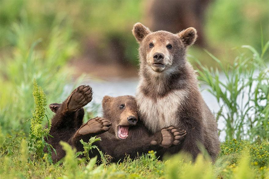 Позитивная галерея: 40 фото сконкурса насамый смешной снимок дикой природы   Канобу - Изображение 3974