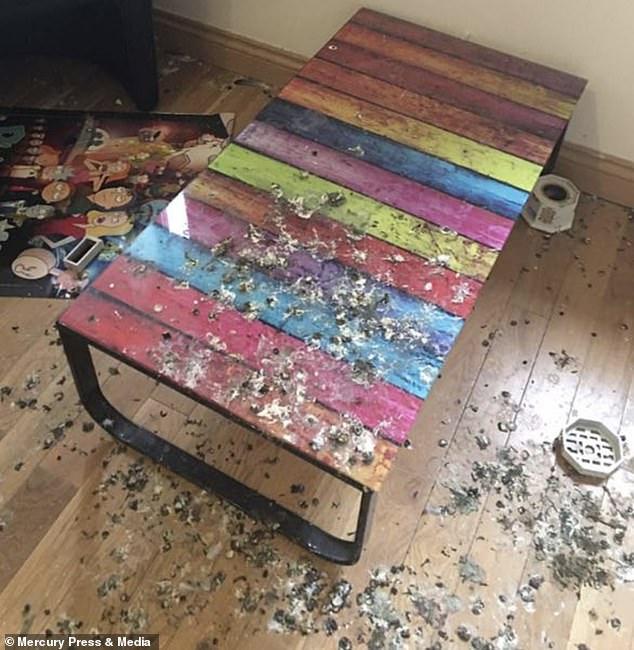 Британские голуби месяцами терроризировали комнату уехавшего студента | Канобу - Изображение 14885