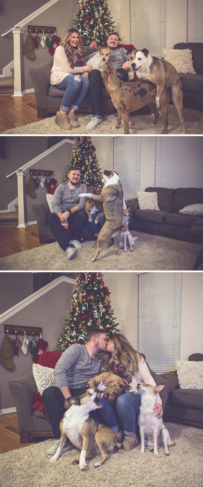 Галерея дурацких рождественских фотографий, которые испортили собаки | Канобу - Изображение 5911